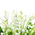 lelies · vallei · witte · bloemen · geïsoleerd · witte · bloem - stockfoto © vapi