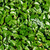 a textured wall of the green leaves stock photo © vapi