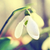 primavera · flores · jardim · água · fundo · verde - foto stock © vapi