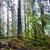 dark misty forest stock photo © vapi