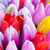 fresh colorful tulips stock photo © vapi