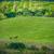deux · chevaux · prairie · famille · soleil · nature - photo stock © vapi