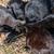 kedi · yavrusu · yeme · çim · kedi · ev · yeşil - stok fotoğraf © vapi