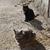 猫 · 顔 · クローズアップ · 表示 · 猫 - ストックフォト © vapi