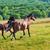 paarden · lopen · blauwe · hemel · groen · gras · voorjaar · zon - stockfoto © vapi