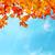 renkli · kırmızı · akçaağaç · yaprakları · şube · doğa - stok fotoğraf © vapi