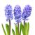 azul · três · flores · folhas · verdes · isolado · branco - foto stock © vapi