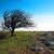 solitário · árvore · azul · céu · sunset · nuvens - foto stock © vapi