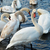 witte · water · familie · bruiloft · liefde · vogel - stockfoto © vapi