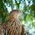isolado · Águia · cabeça · perfil · americano · careca - foto stock © vapi