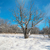 kış · buz · gibi · orman · güneş · doğa · manzara - stok fotoğraf © vapi