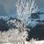 kış · buz · gibi · orman · ağaç · güneş - stok fotoğraf © vapi