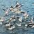 gaivota · voador · acima · água · blue · sky · mar - foto stock © vapi