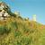 field of poppy and ruins stock photo © vapi