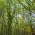 深い · 森林 · ツリー · 自然 · 背景 · 木 - ストックフォト © vapi