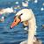 beyaz · kuğu · güzel · genç · kız · kapalı · parça - stok fotoğraf © vapi