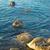 zee · stenen · kust · zonsopgang · water · boom - stockfoto © vapi