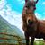 barna · ló · testtartás · nyár · évszak · égbolt - stock fotó © vapi