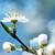 fioritura · fiore · bianco · erba · verde · fiore · fiori · primavera - foto d'archivio © vapi