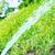 yeşil · çayır · mavi · gökyüzü · bahar · soyut - stok fotoğraf © vapi
