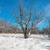 kış · buz · gibi · orman · ağaç · güneş · doğa - stok fotoğraf © vapi