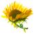 ひまわり · 緑の葉 · 花束 · 赤 · 液果類 · ガラス - ストックフォト © vapi