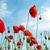czerwony · maki · Błękitne · niebo · chmury · wiosną · charakter - zdjęcia stock © vapi