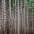 misty forest stock photo © vapi