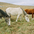 three grazing horses of different colors stock photo © vapi