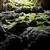 выход · пещере · Солнечный · пейзаж · лес · Blue · Sky - Сток-фото © vapi