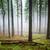 outono · floresta · dente · noite · colorido · paisagem - foto stock © vapi