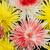 rojo · blanco · primavera · belleza · otono · regalo - foto stock © vapi