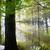 otono · caída · parque · camino · sol - foto stock © vapi