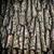 dąb · kory · powierzchnia · mech · naturalnych · tekstury - zdjęcia stock © vapi