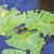 béka · növény · levelibéka · ki · közelkép · fókusz - stock fotó © vapi
