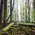 donkere · mistig · bos · landschap · groot · bomen - stockfoto © vapi