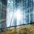 otono · forestales · niebla · colorido · paisaje - foto stock © vapi