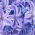 azul · belo · flores · isolado · branco · primavera - foto stock © vapi
