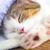 Cute · прелестный · котенка · ванна · расслабляющая · смешные - Сток-фото © vapi