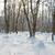 kış · buz · gibi · orman · manzara · parlak - stok fotoğraf © vapi