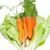 Geel · squash · sla · groene · erwten · plantaardige - stockfoto © vapi