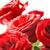 赤 · 美しい · バラ · 水滴 · 孤立した - ストックフォト © vapi
