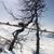 parlak · kış · manzara · ağaçlar · orman · gündoğumu - stok fotoğraf © vapi