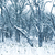 alan · ağaçlar · kar · mavi · mavi · gökyüzü · gökyüzü - stok fotoğraf © vapi