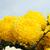 flor · crisantemo · cielo · azul · cielo · primavera · naturaleza - foto stock © vapi