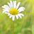 zachte · heldere · witte · Geel · ander · planten - stockfoto © vapi