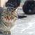üç · kediler · kedi · beyaz · hayvan - stok fotoğraf © vapi