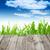 nyár · fapadló · zöld · fű · bokeh · napfény · tavasz - stock fotó © vapi