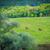 two horses on green meadow stock photo © vapi