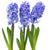 azul · flores · folhas · verdes · vaso · isolado · branco - foto stock © vapi
